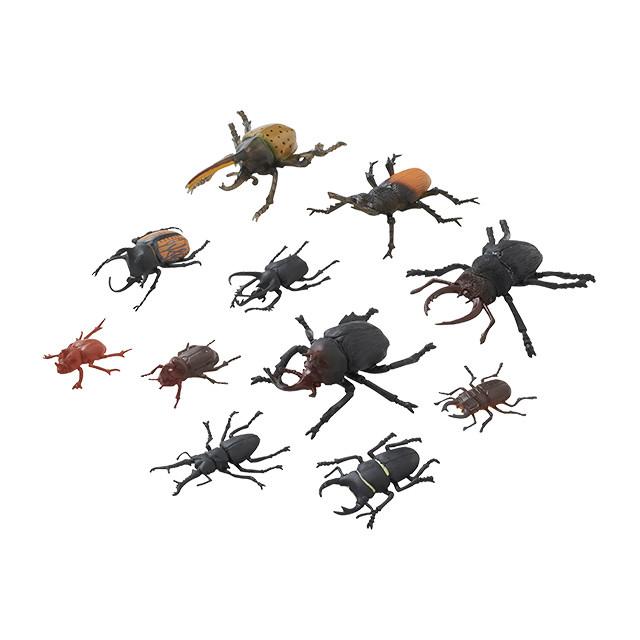 昆虫王国 カブト&クワガタ